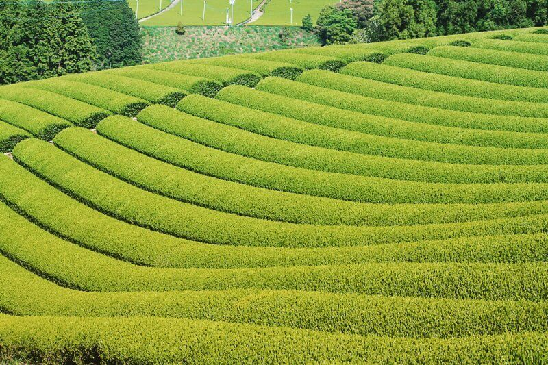 sugimoto tea jfoodo